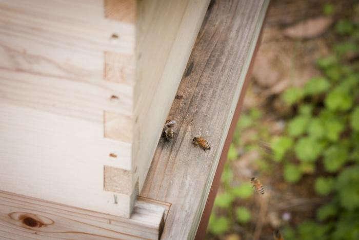 700_backyard-beekeeping-bees-number-three