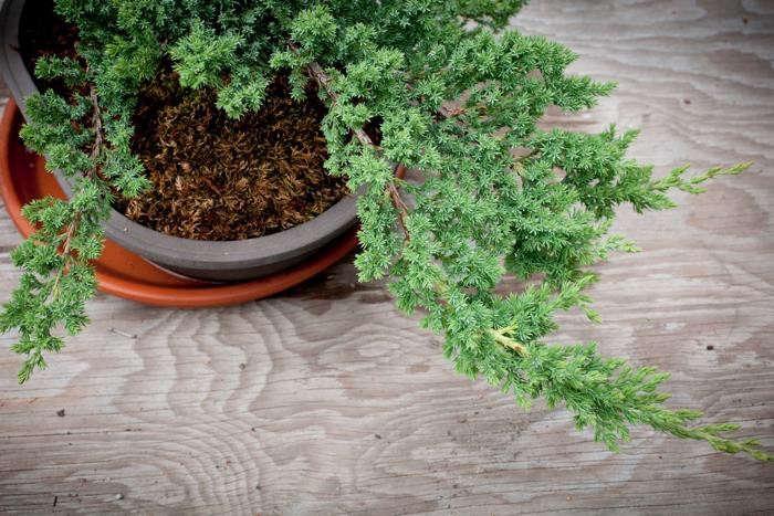 700_calistoga-ranch-bonsai-02