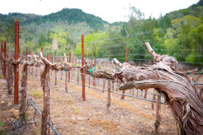 700_calistoga-ranch-vineyard-02