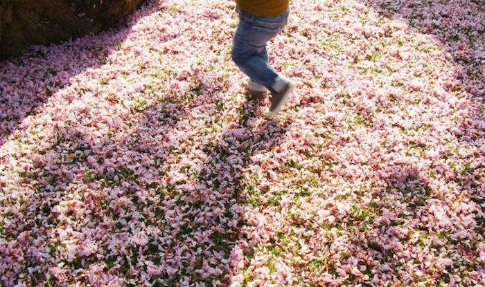 700_flowers-falling