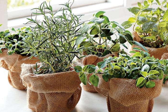 700_herbs-in-burlap
