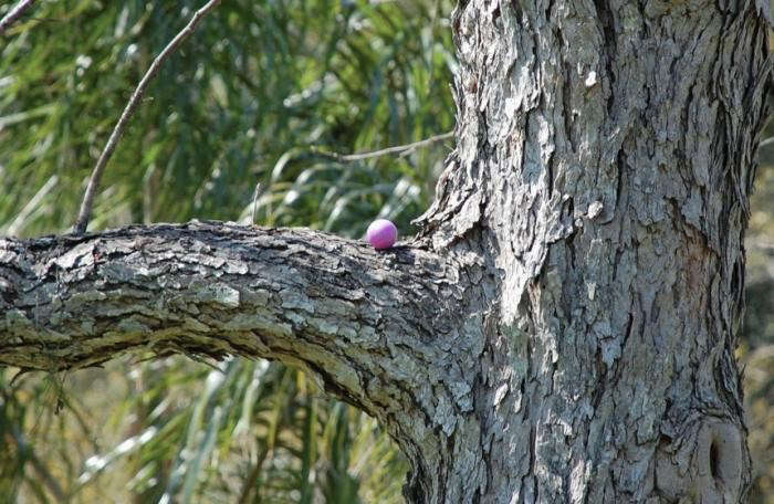 700_pink-egg-in-tree-found