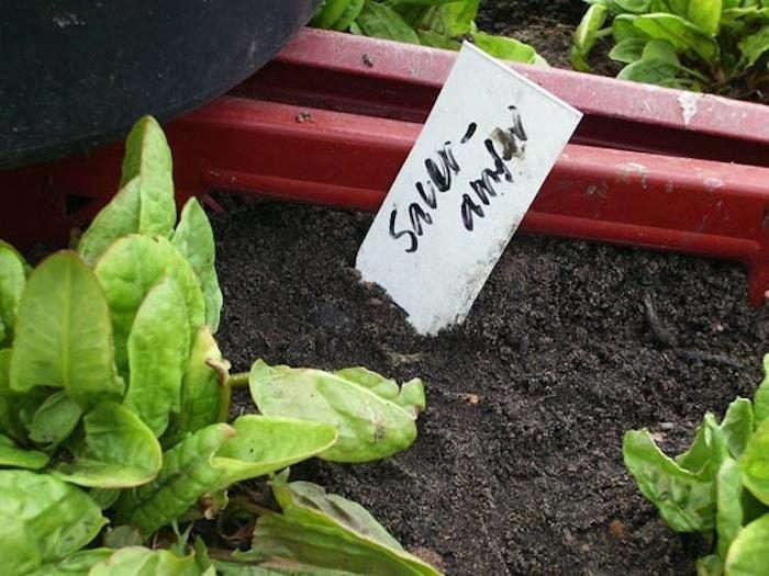 700_prinzessinnengarten-lettuce
