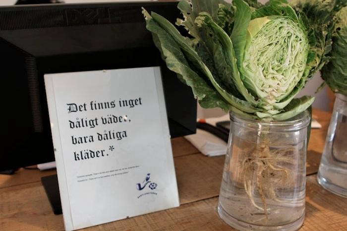 700_sliced-cabbage-arrangement