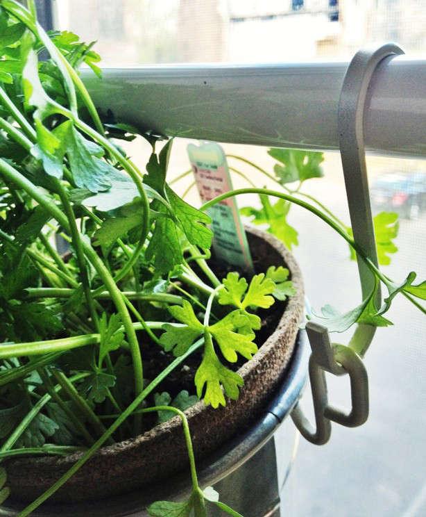 ikea-window-herb-planters-closeup