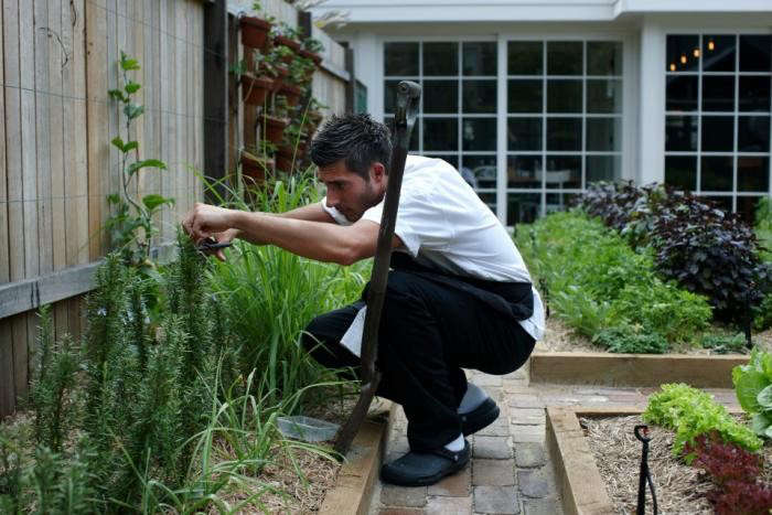700_chiswick-forager-in-garden