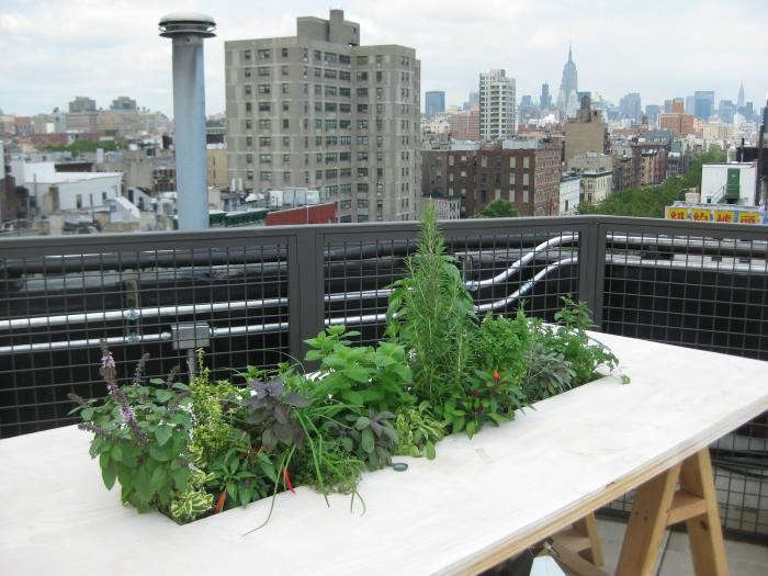 700_fat-radish-restaurant-edible-garden-outdoors
