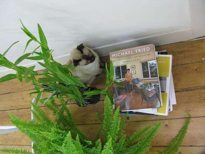 700_mr-kitly-australia-plants-and-cat