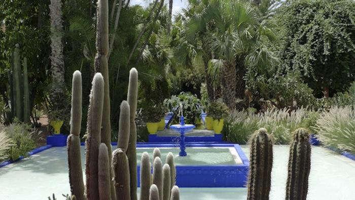700_reid-cactus