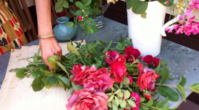 700_renegade-roses