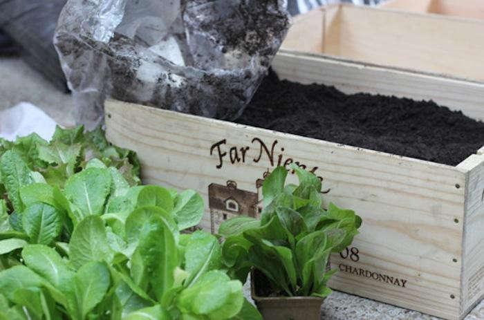 700_urban-gardening-raised-beds-2