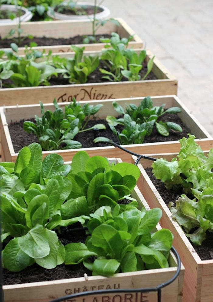 DIY: Small Space Vegetable Garden: Remodelista