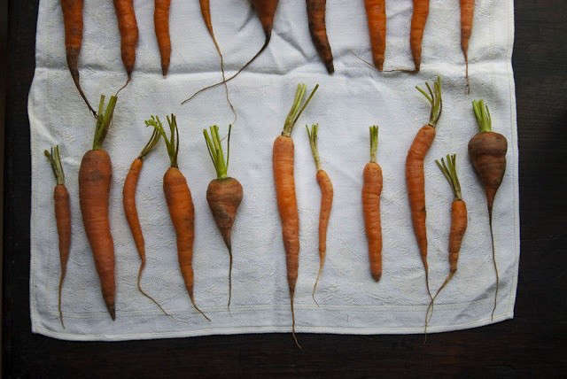 carrots-cleaned-up