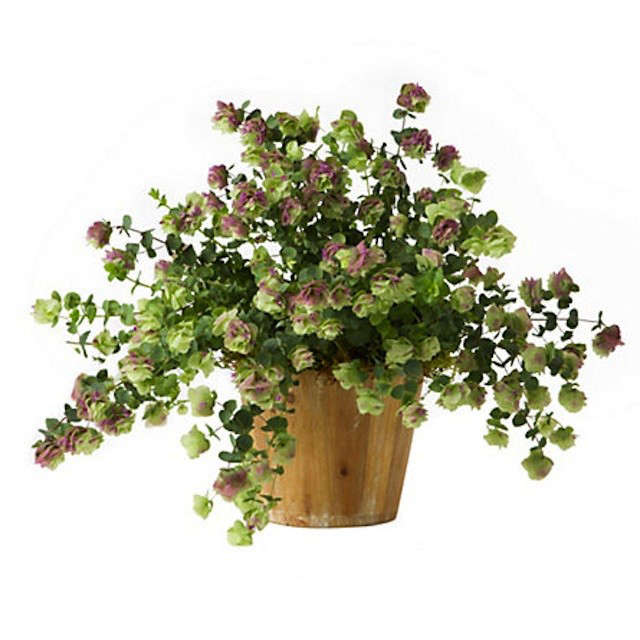 flowering-oregano