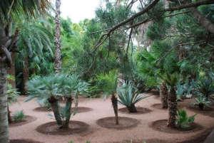 Majorelle-Garden-Louis-Majorelle-specimen-plants
