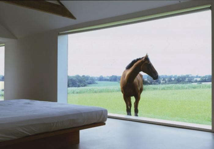 700_pawson-tilty-horse-window