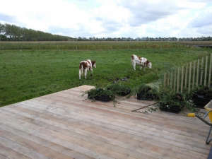 Arjen-Reas-Zoetermeer-green-fields-cows
