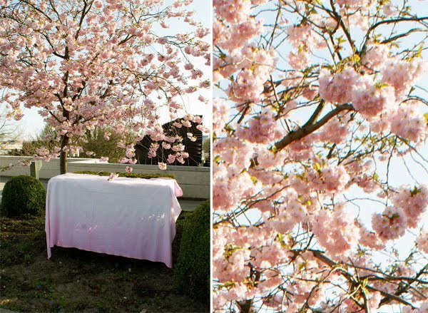pink-dyed-tablecloth