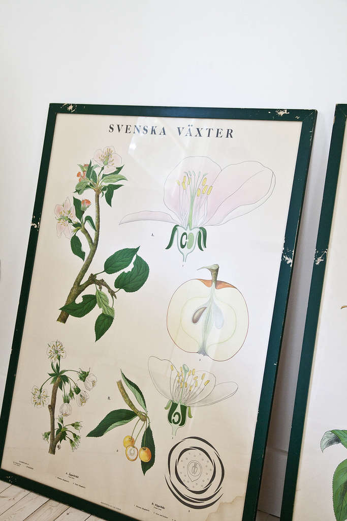 swedish-botanical-print-kitka