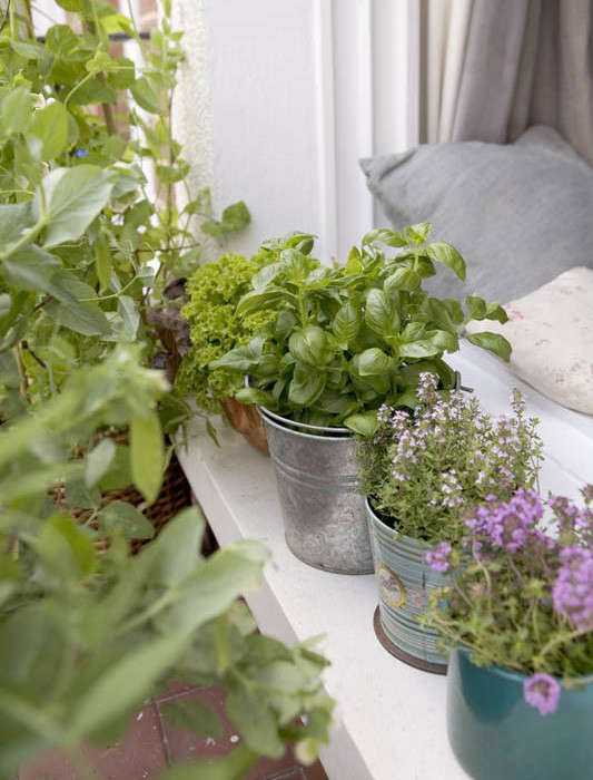 herbwindowsill