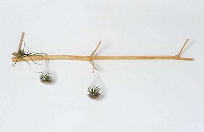 tamarind-wall-branch-11