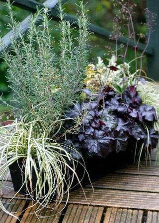 balcony-gardener-evergreen-box