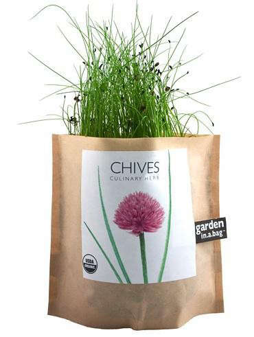 chives-in-a-bag-branch
