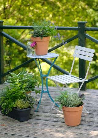 small-edible-garden-balcony-gardener