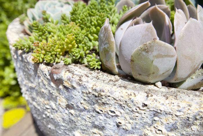 700_succulents-closeup-2