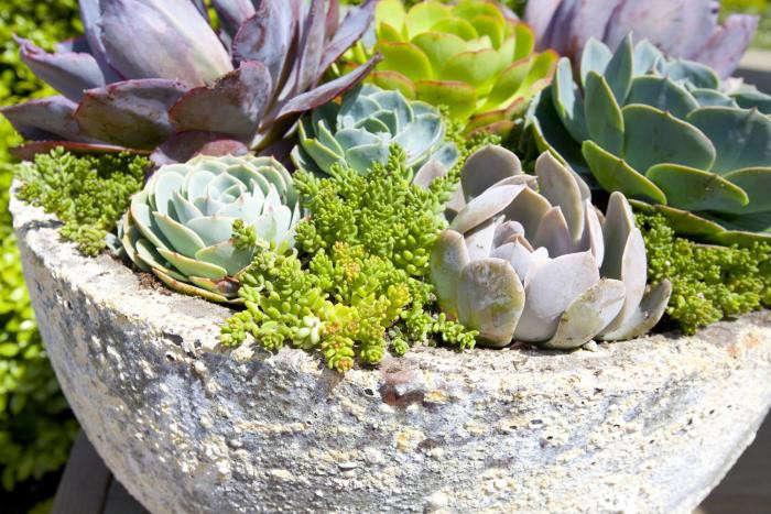 700_succulents-in-concrete-planter