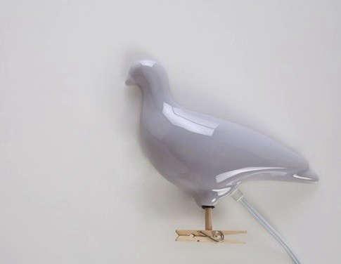 gray-pigeon-light