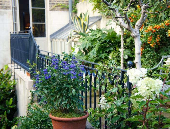700_remodelista-will-fisher-garden-16