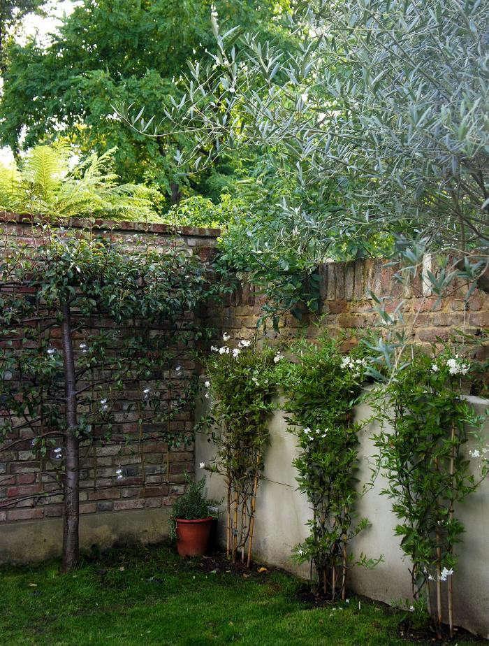 700_remodelista-will-fisher-garden-17