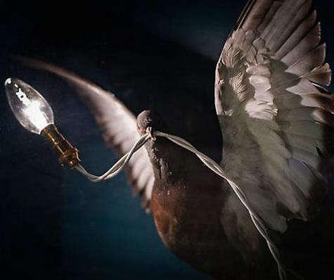 riding-house-bird-lamp