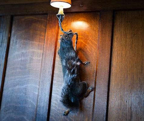 riding-house-squirrel-lamp-2