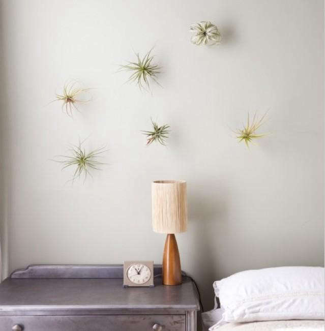 rm-flora-grubb-plant-hooks1