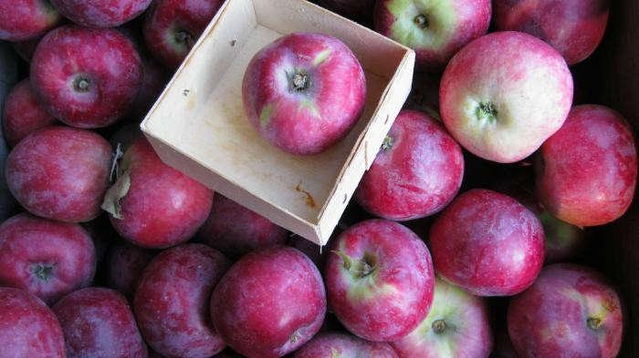 700_700-philo-apple-farm-51