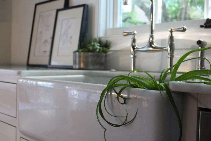 700_airplant-2