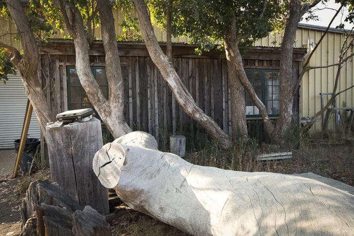 700_arborica-14