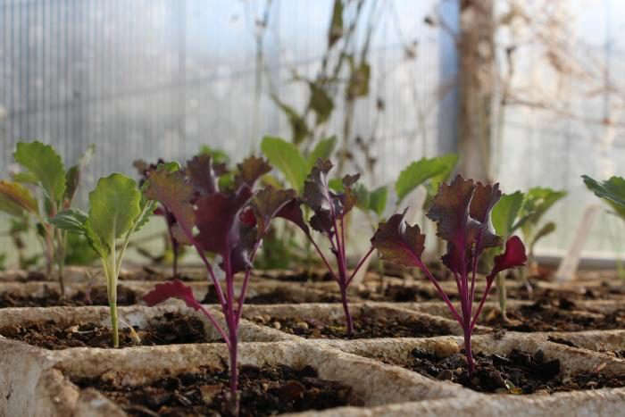 700_greenhouse-starts