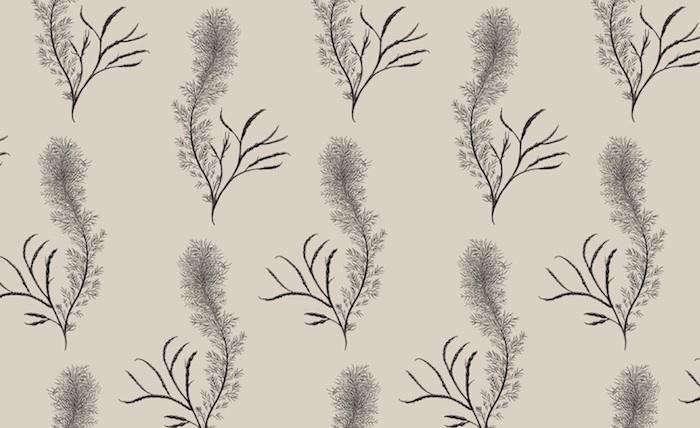 700_min-hogg-feather-wallpaper