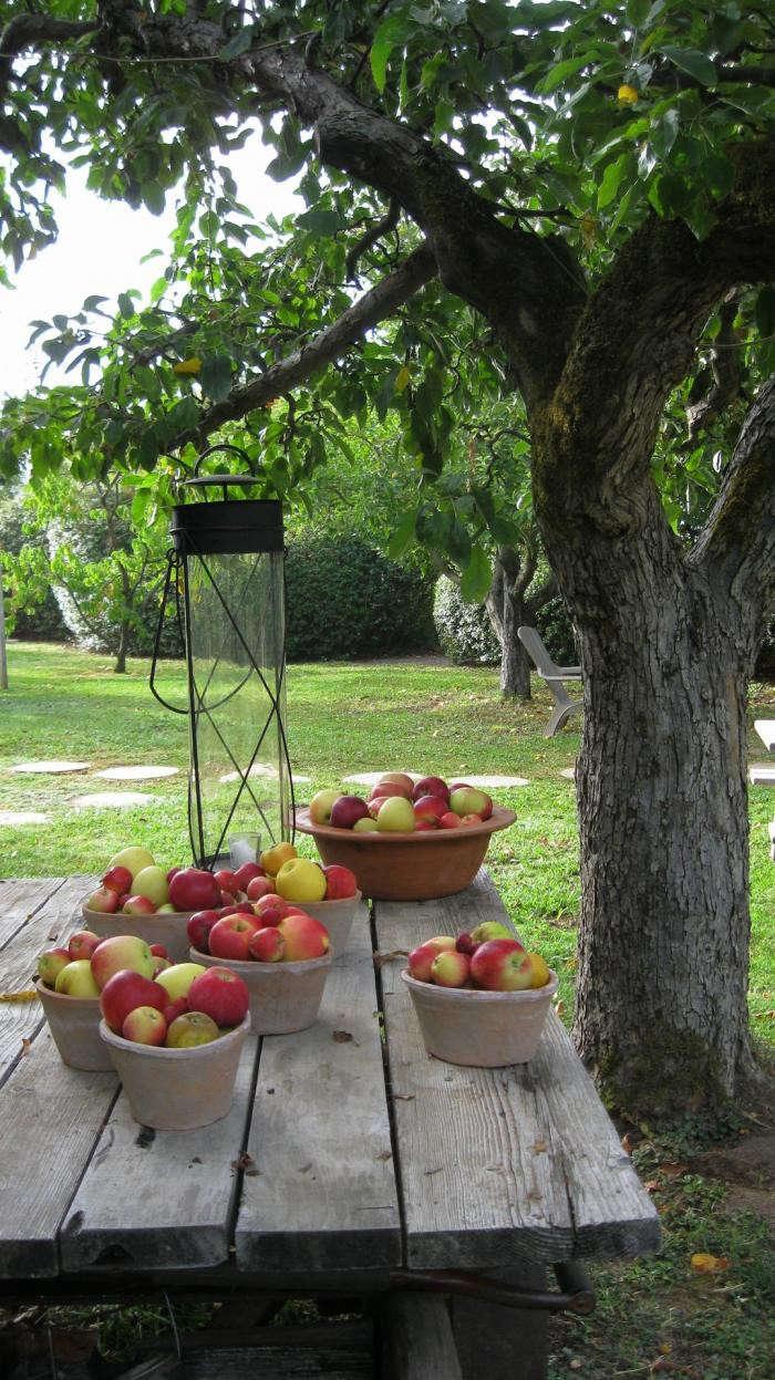 700_philo-apple-farm-33