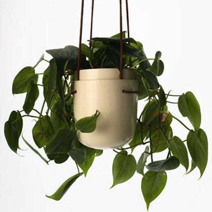 700_plantpodplant