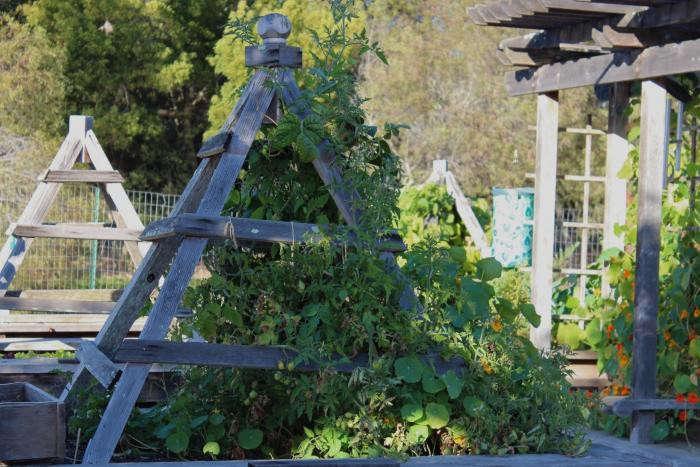 700_redwoods-teepees