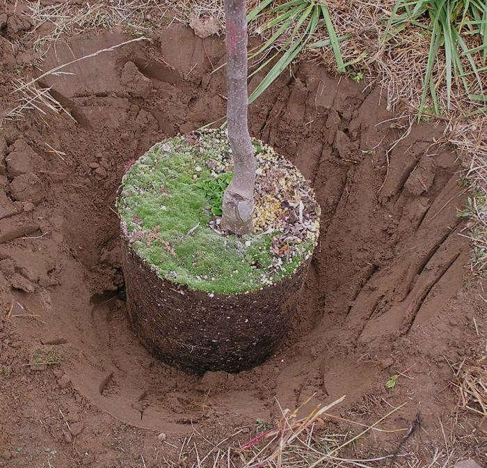 700_treeplant