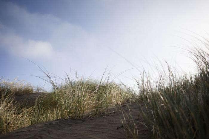 700_wayfare-ocean-beach