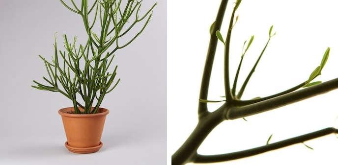 pencil-plant-montage