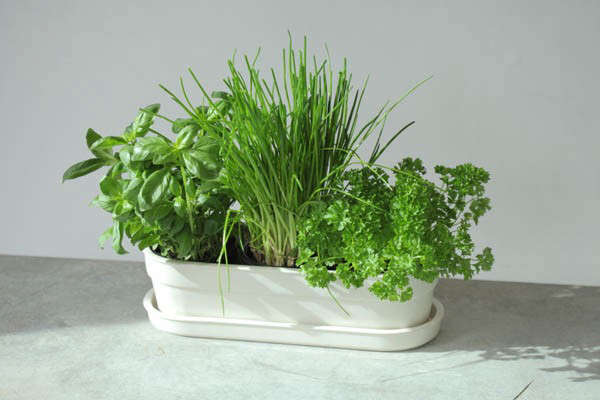 remodelista-jody-leach-herbivore-planter-jpeg