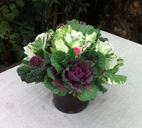 alexa-flowers-1