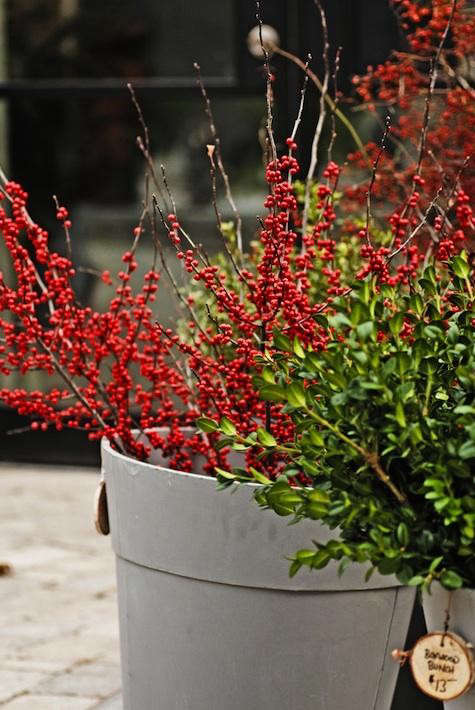 centro-berries